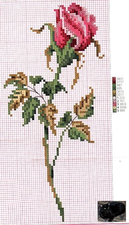 Красная роза на черном фоне - Depositphotos