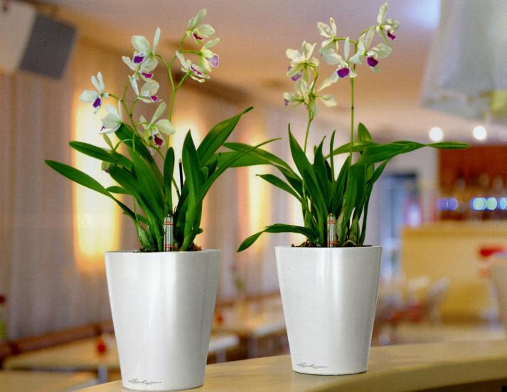 Популярные домашние цветы в горшках
