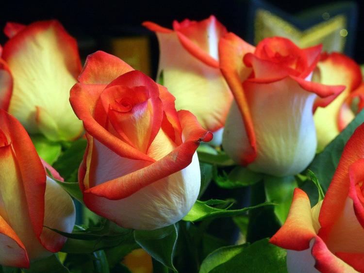 Фото просто красивые цветы