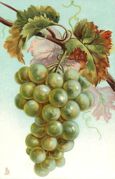 Поздравление с виноградом