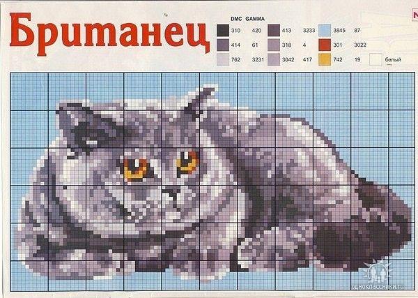 Схема вышивок британский кот